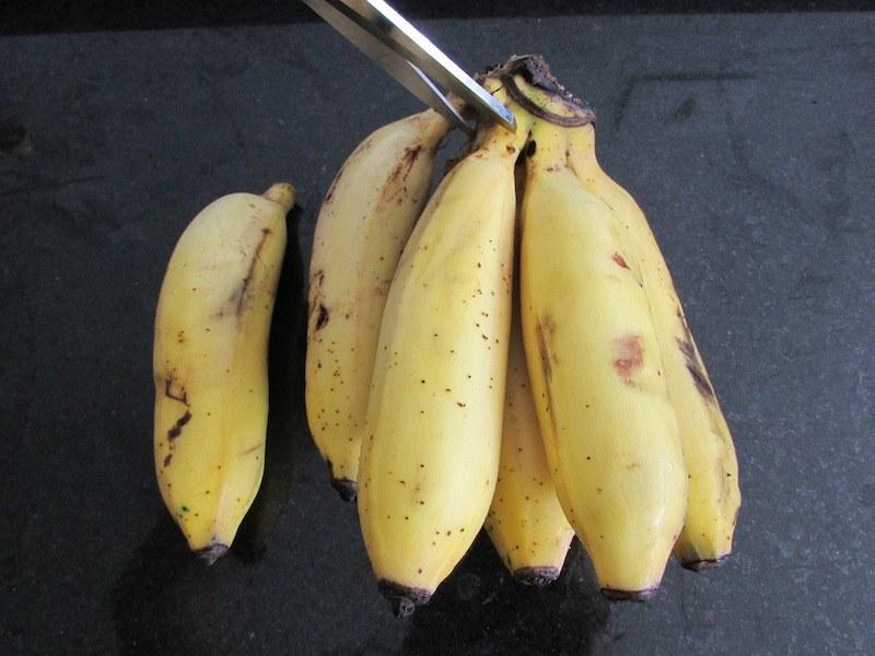 1 evitar mosquinhas mosquitinhos banana SOS Solteiro