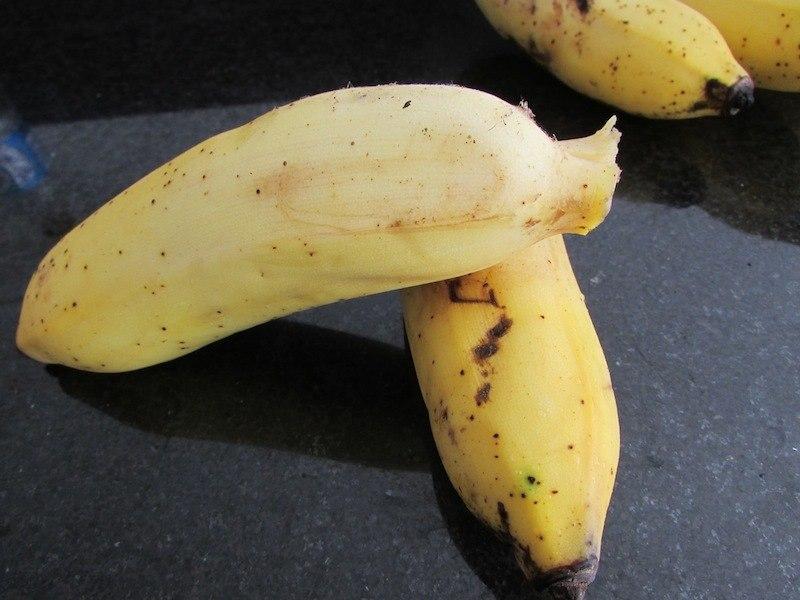 2 evitar mosquinhas mosquitinhos banana SOS Solteiro