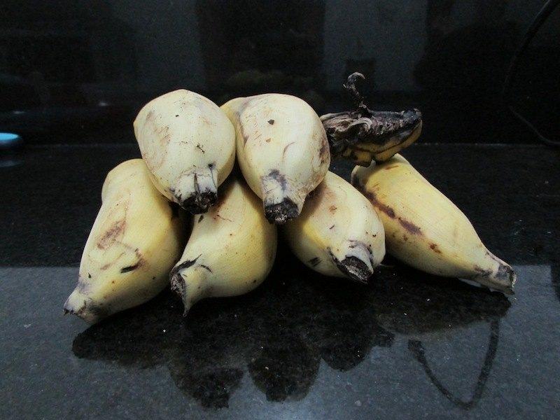 3 evitar mosquinhas mosquitinhos banana SOS Solteiro