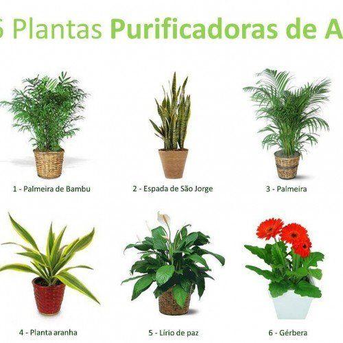 6-plantas-purificadoras-de-ar-680×578