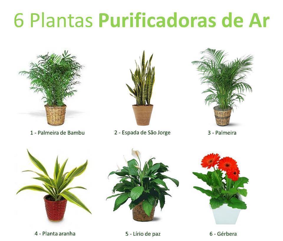 6 plantas que purificam o ar