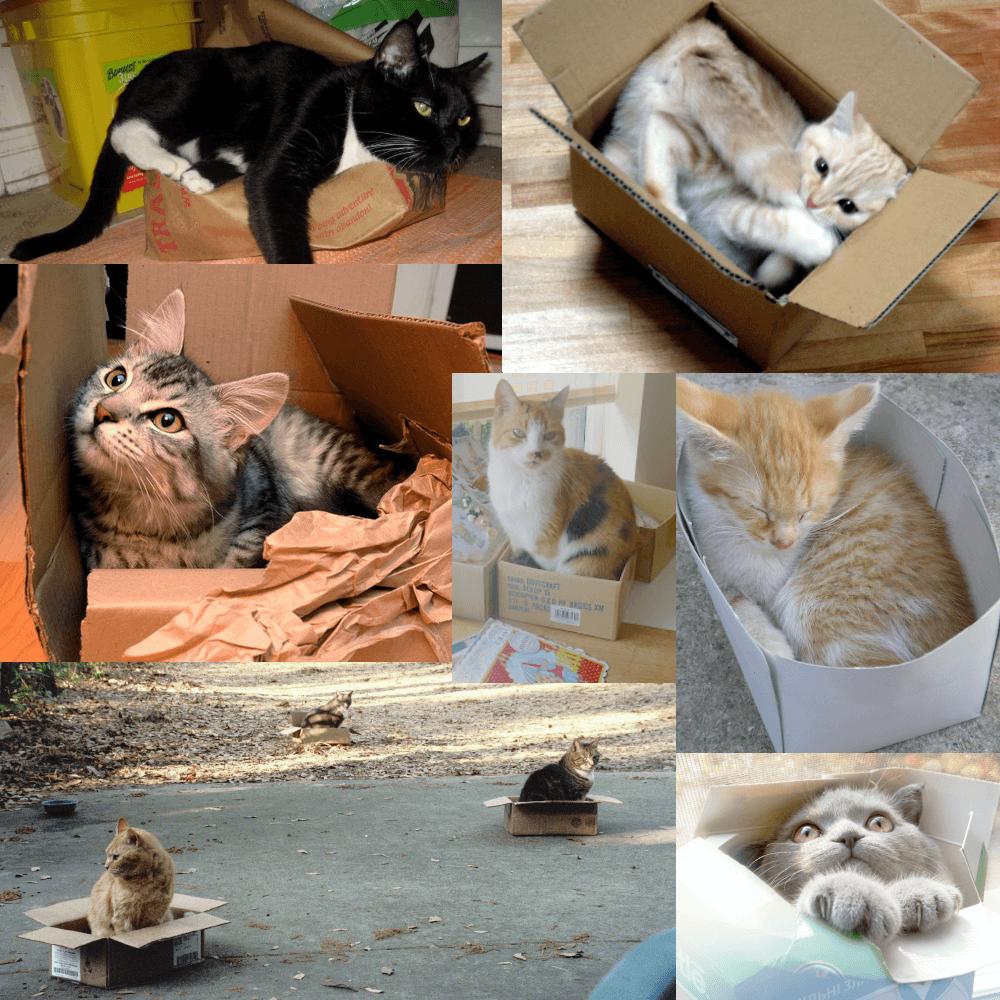 gatos na caixa de papelao