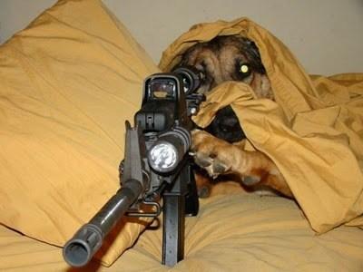 alarme cao de guarda