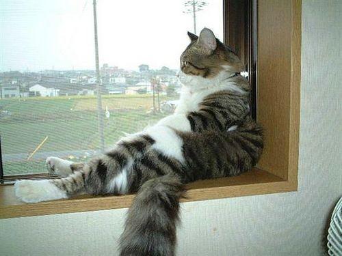 gato-em-apartamento