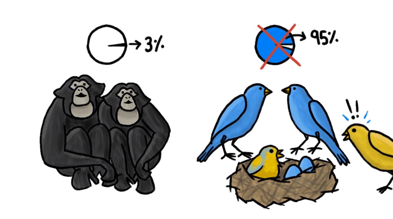 animais nao sao monogamicos 1