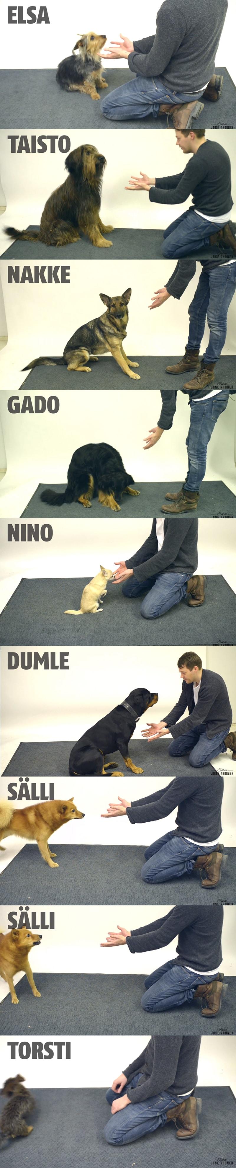 cachorros e magica