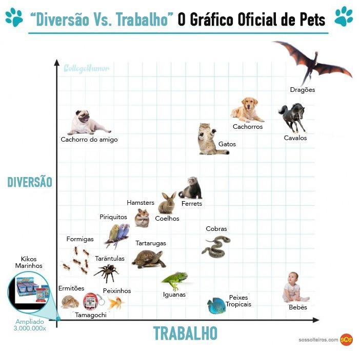 grafico animais de estimacao trabalho diversao