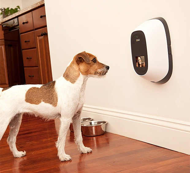 petchatz-pet-webcam-and-treat-dispenser-0