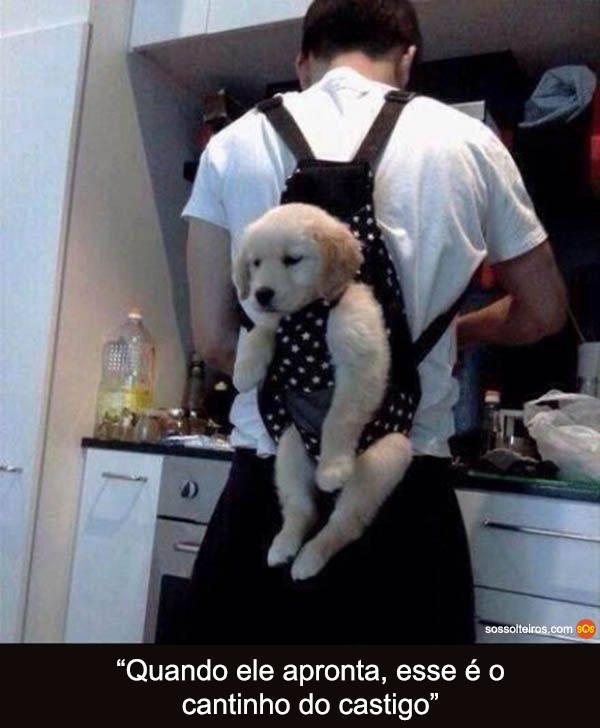 cantinho do castigo cachorro