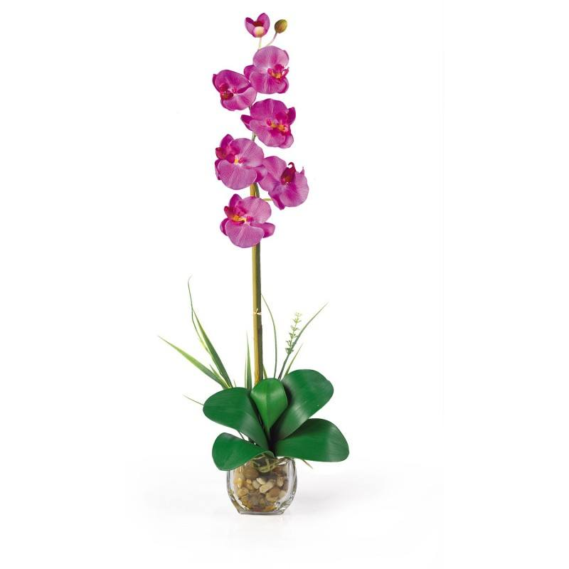 orquideamariposa_sossolteiros_vivadecora