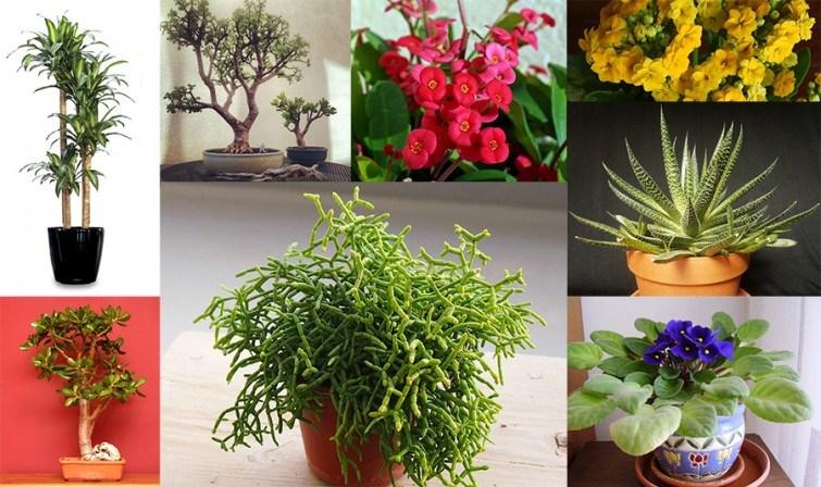 plantas para esquecidos sem tempo