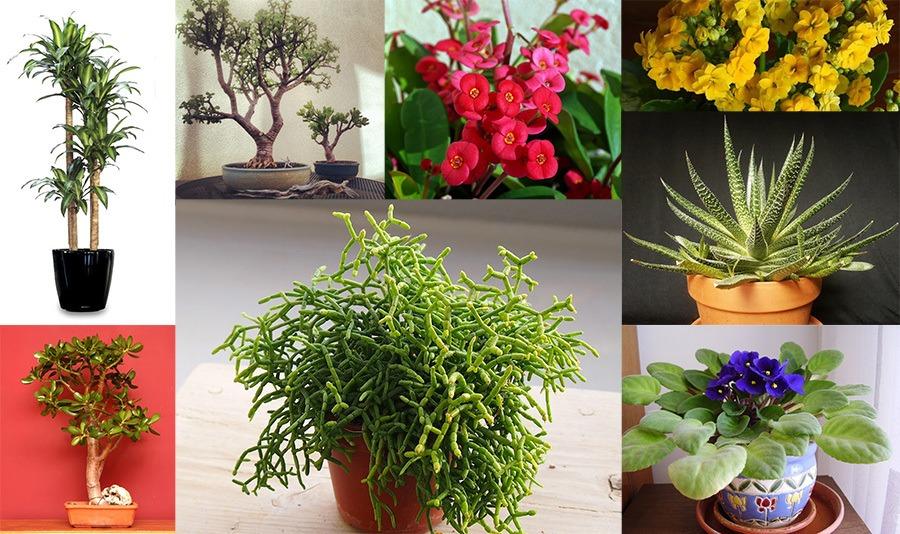 Guia Do Jardim 30 Plantas Para Quem Não Tem Tempo