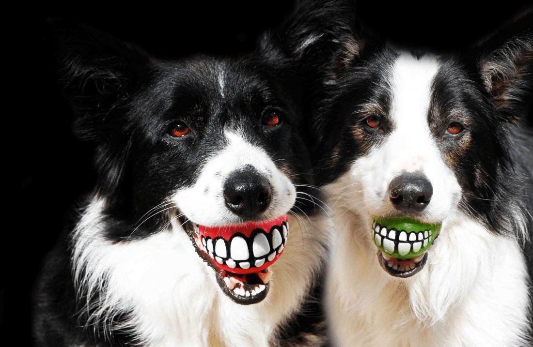 bola-sorriso-dogs
