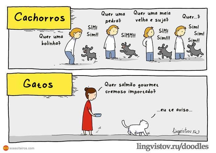 gatos-cachorros