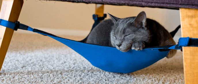 rede-gatos