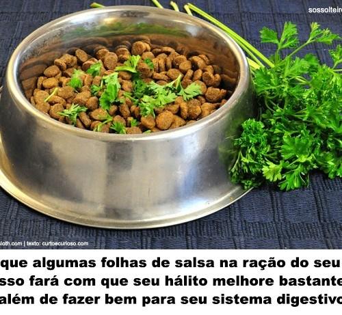 salsa racao cachorro halito digestao