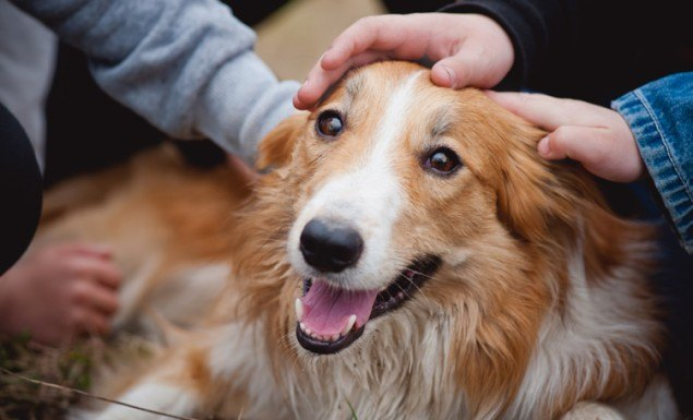shutterstock_118891501_dogbeingcaressed