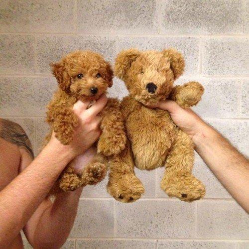 9_cachorros_objetos_sos_solteiros.jpg
