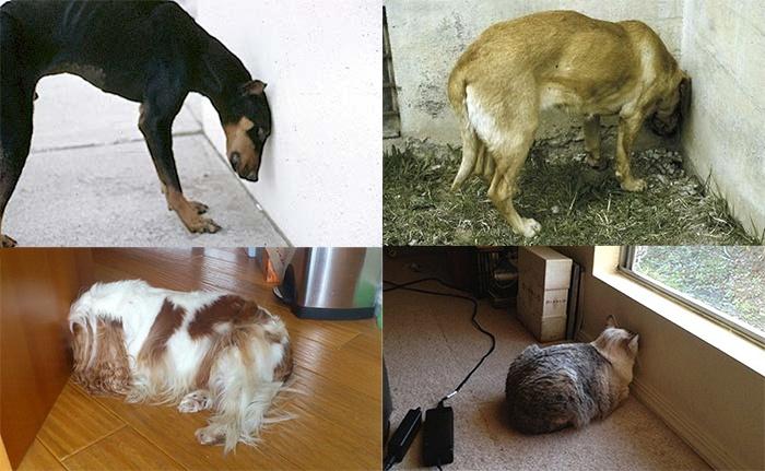 sos solteiros animais pressionando cabeca na parede