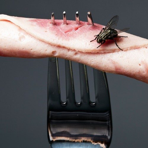 dnews–1275–what-happens-when-a-fly-lands-on-your-food–large.thumb