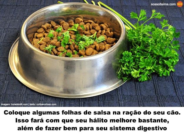 salsa-racao-cachorro-halito-digestao