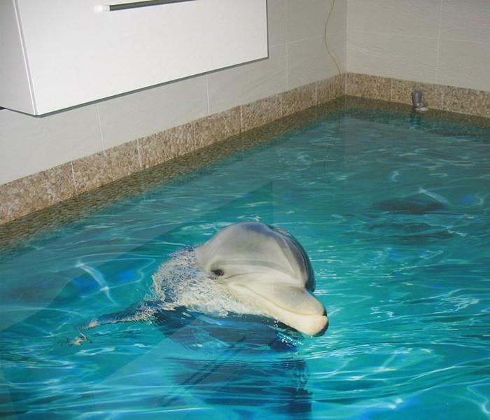 golfinho_sossolteiros_vivadecora