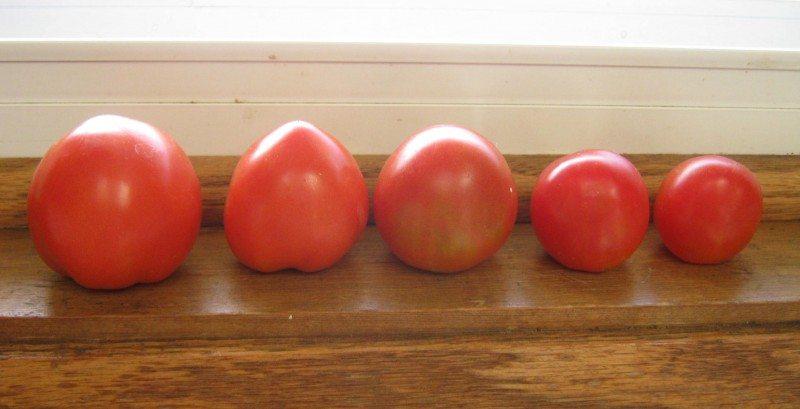tomates_sossolteiros
