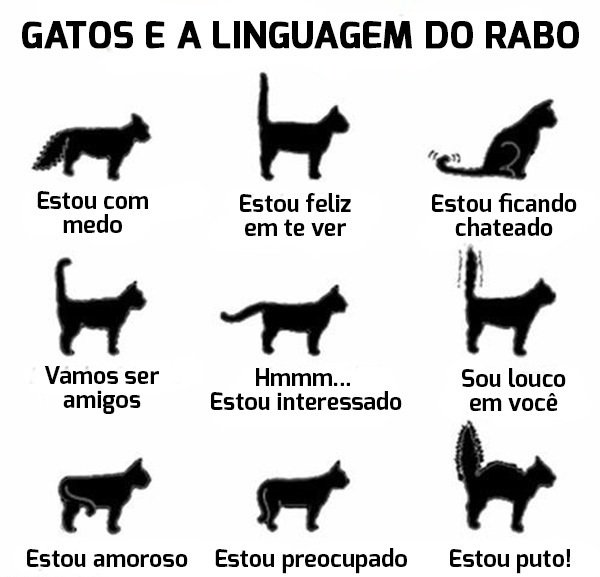 linguagem rabo dos gatos