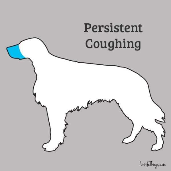 coughing_sossolteiros