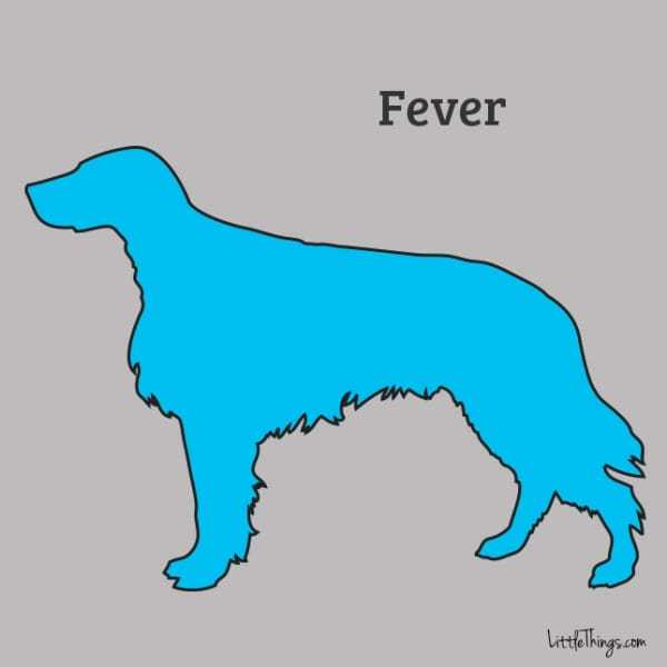 fever_sossolteiros