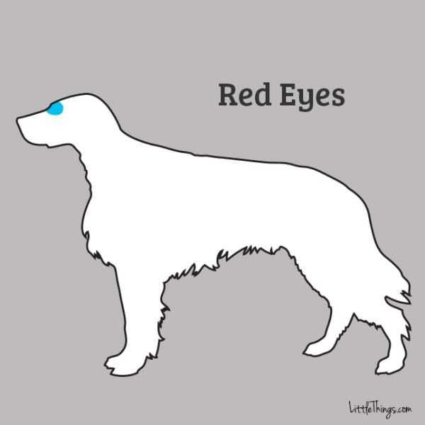 red+eyes_sossolteiros
