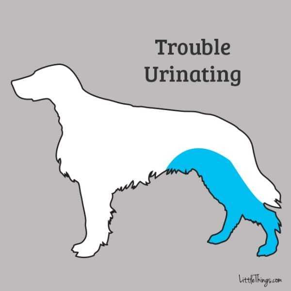 urinate_sossolteiros
