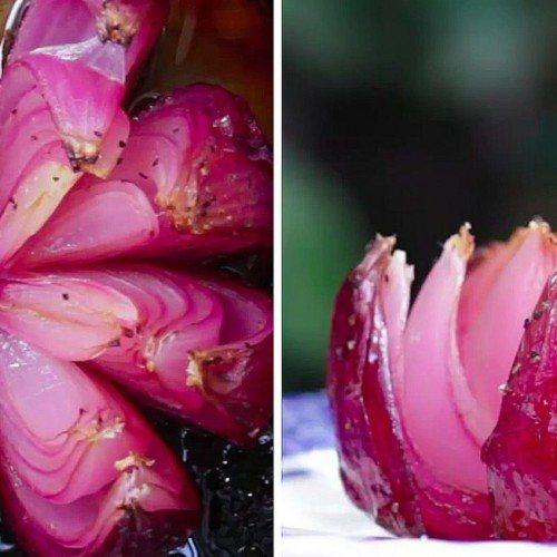 flor lotus cebola