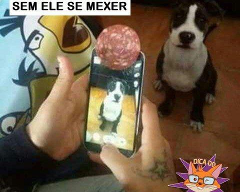 como tirar foto do cachorro