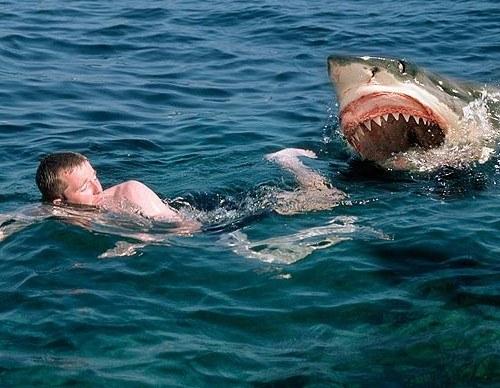 tubarones_sosslteiros