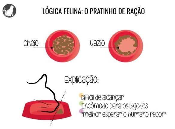 gatinhologica
