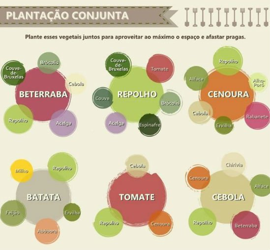 infografico_legumes4_sossolteiros