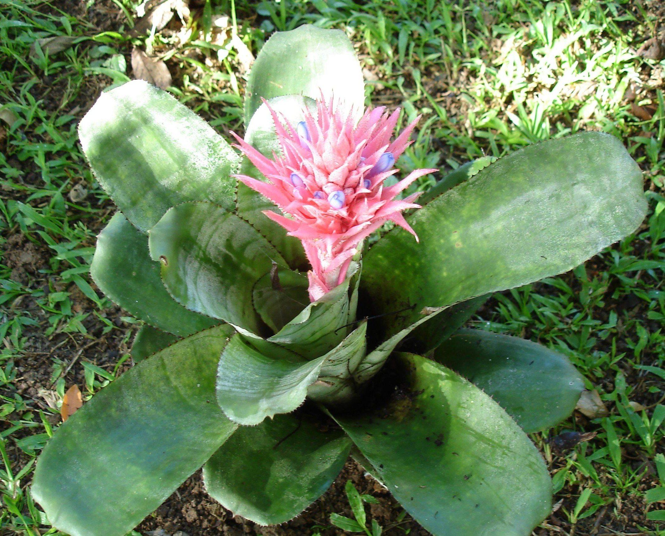 Universo das flores, https://universodasflores.wordpress.com/2013/03/21/page/3/