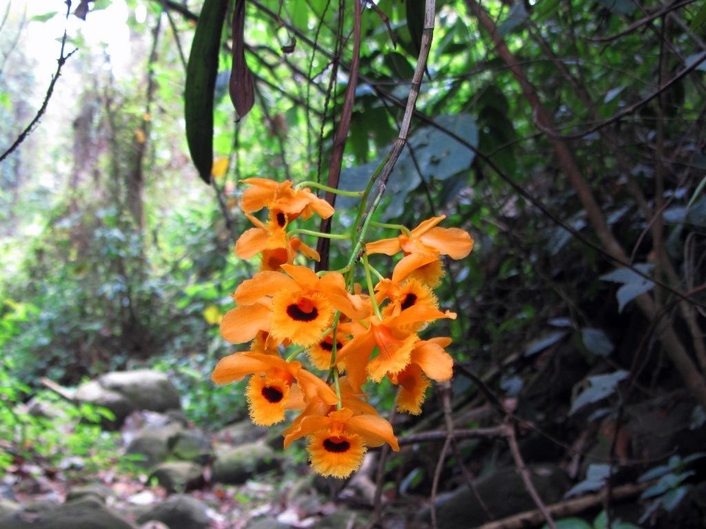 Faz Fácil, http://www.fazfacil.com.br/jardim/orquideas/especies-orquideas/