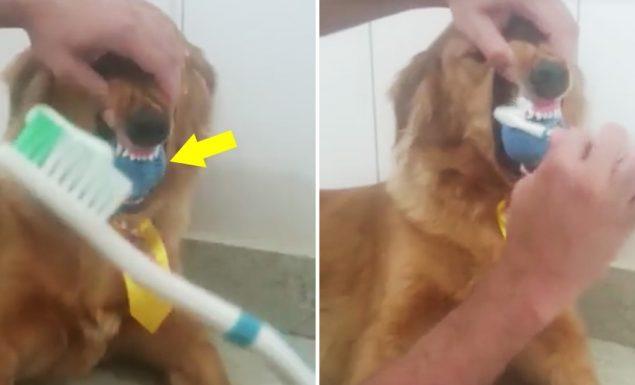 como escovar os dentes do cachorro