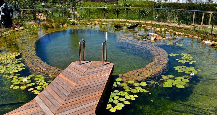 Conhe a as piscinas org nicas que dispensam produtos for Albercas ecologicas
