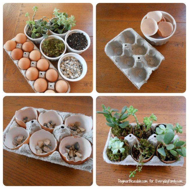Everyday Family, http://www.everydayfamily.com/blog/diy-succulent-garden-in-egg-carton/