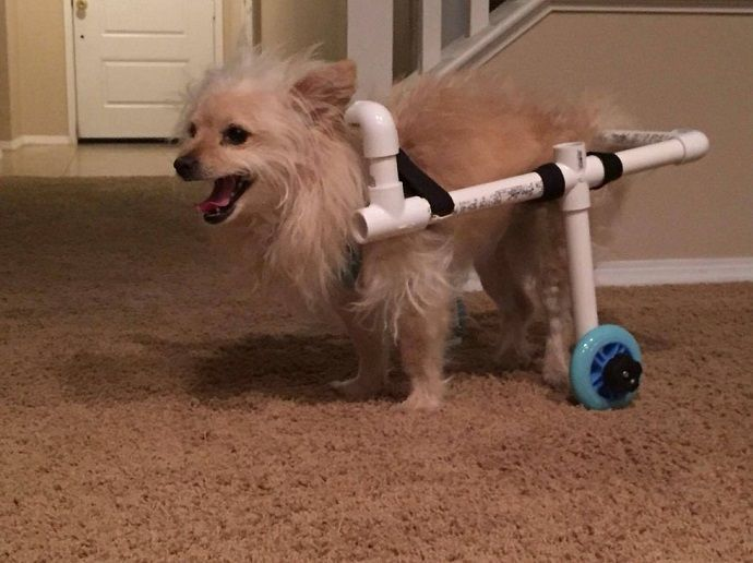 Notey, http://www.notey.com/blogs/dog-wheelchair