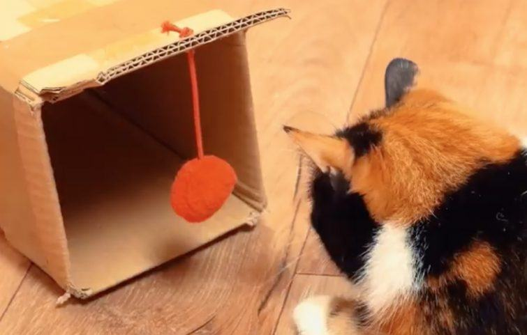 projeto-diy-gatos