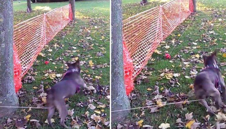 passeando-cachorro-sozinho