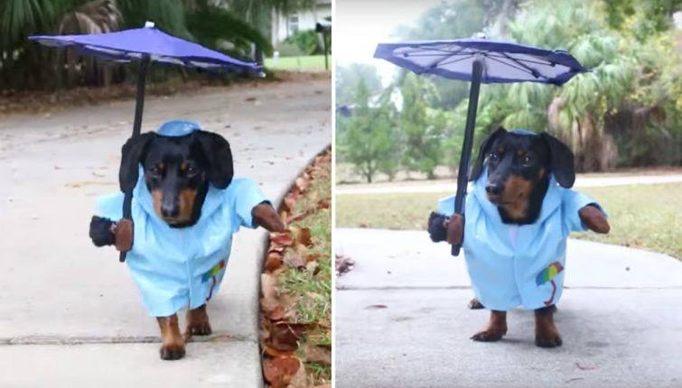 capa-de-chuva-cachorro