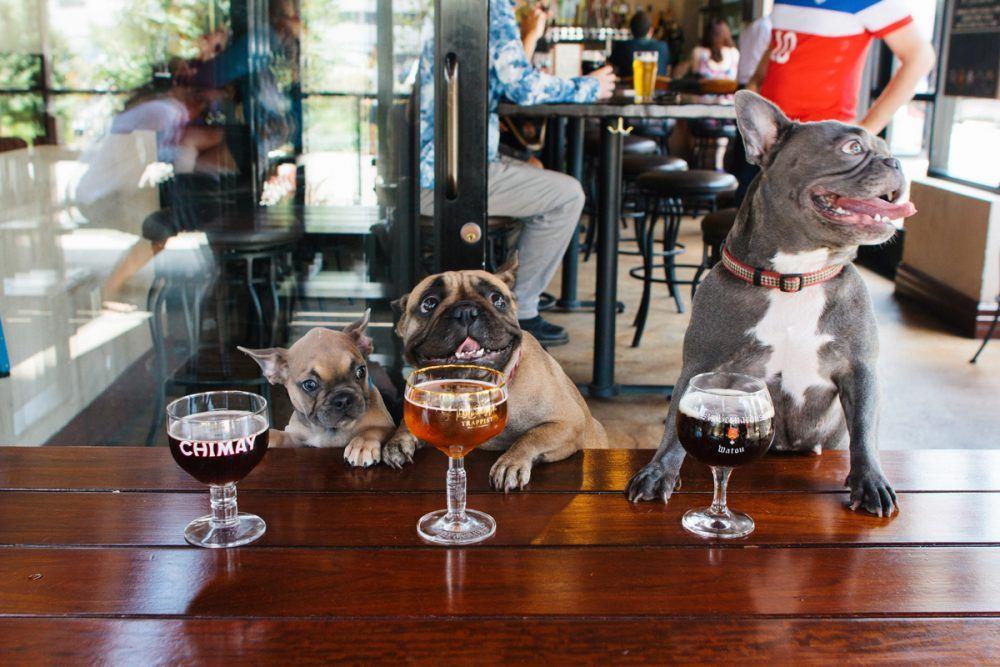 Juicysantos, https://www.juicysantos.com.br/onde-comer/bares-e-restaurantes-pet-friendly-em-santos/