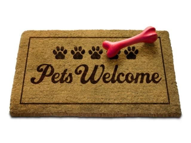 Petmoney, http://petmoney.blogosfera.uol.com.br/2015/10/24/pet-friendly-guias-listam-lugares-onde-animais-de-estimacao-sao-bem-vindos/
