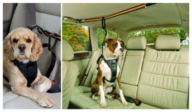 Guia Saludable, http://guiasaludable.net/estilo-de-vida/este-invento-salvara-la-vida-de-muchos-perros