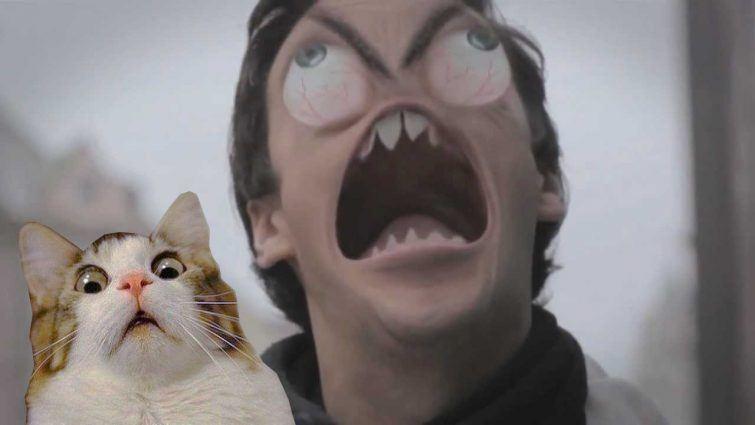 gato coco raiva